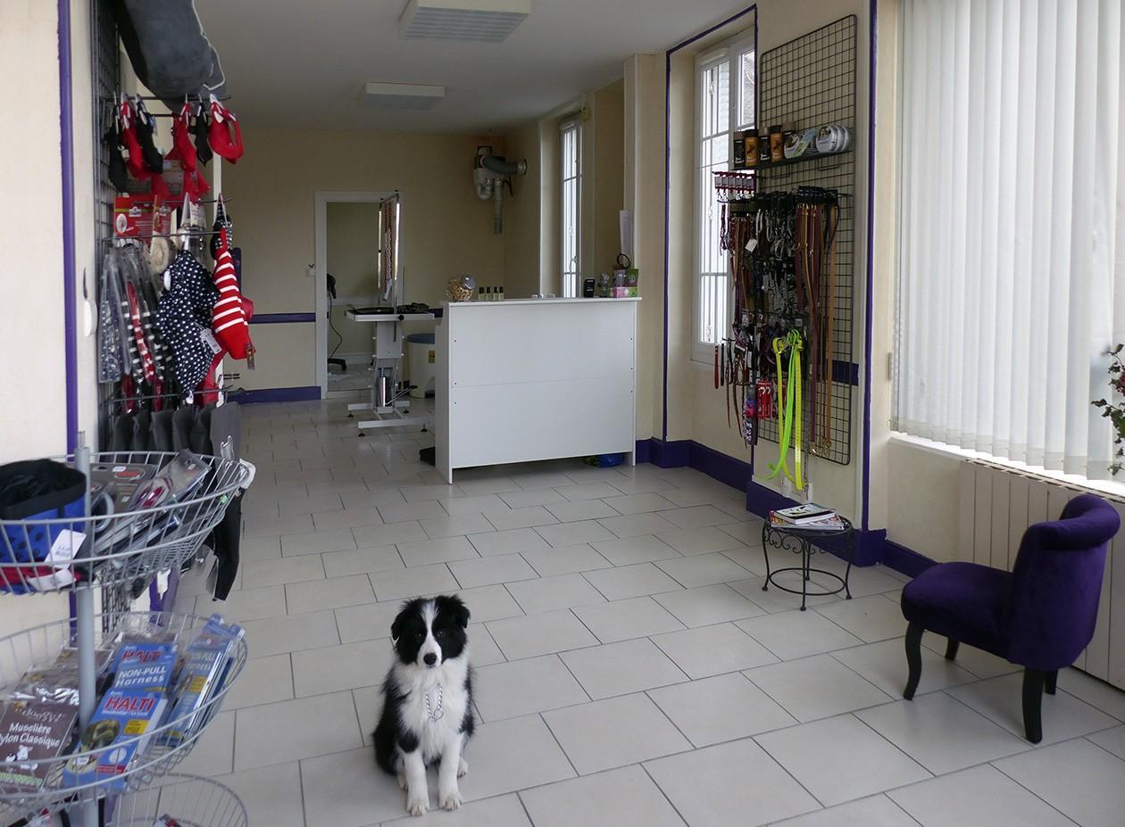 Salon de toilettage chiens et chats for Salon toilettage